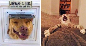 Einige lustige Fotos von Hunden und Katzen, die unglaublich witzig sind