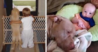 17 Bilder von seltener Süße, die die wunderbare Freundschaft zwischen Kindern und Hunden erzählen