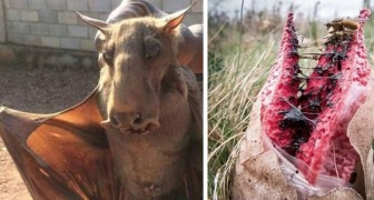 Chiedono agli utenti di inviare le foto più spaventose scattate in natura: questo è il risultato