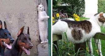 31 wirkliche kuriose Katzenfotos