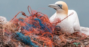 10 semplicissime azioni quotidiane che possono salvare l'ambiente dalla distruzione