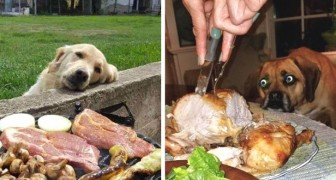 These photos testify to the deep love that dogs have for food!
