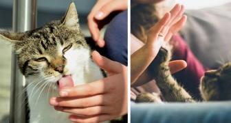 10 beteenden som katter använder sig av för att tala om att de älskar dig...även om du inte är medveten om det