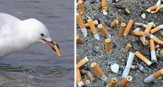 Les mégots de cigarettes sont la plus grande source de pollution des océans