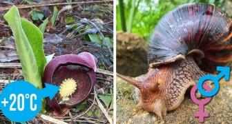 La natura non smette mai di sorprendere: ecco 10 fatti curiosi che pochi conoscono