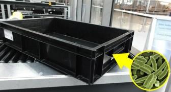 Die Gepäckkontrollkästchen am Flughafen enthalten mehr Bakterien als eine Toilette