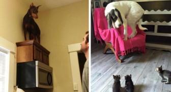 10 divertenti immagini di cani terrorizzati da qualcosa di RIDICOLO