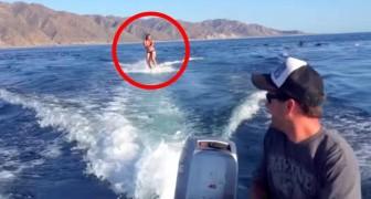 Surf avec les dauphins