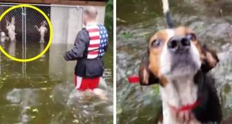 Hanno abbandonato i cani nelle gabbie durante l'uragano Florence: alcuni volontari tornano a salvarli