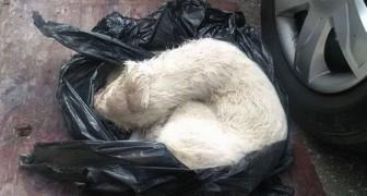 Ze hebben haar in een zak gestopt en als afval weggegooid, totdat iemand haar zag
