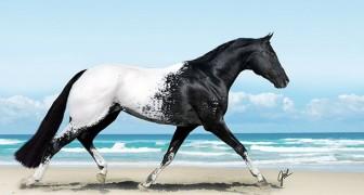 15 specie di animali talmente rari e particolari che dubiterai della loro esistenza