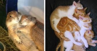 11 exemplos de amor animal que podem iluminar os dias mais tristes