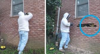 Un cacciatore di api inizia a rimuovere i mattoni, e le immagini diventano via via più sorprendenti