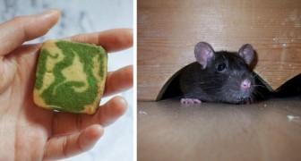 Como deixar os ratos longe da sua casa sem usar perigosos produtos químicos