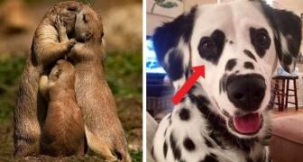 19 animaux amoureux qui vous feront sourire même pendant une mauvaise journee.