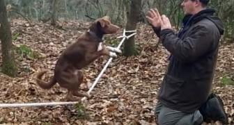 The amazing acrobatic dog