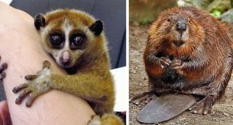 15 specie di animali che sembrano tenerissime...ma in realtà sono estremamente pericolose
