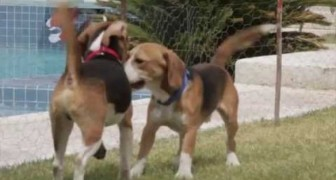 La increible liberacion de los perros Beagle luego de 9 años de cautiverio.