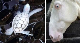 23 fotografie di rarissimi animali albini che difficilmente potrai incontrare dal vivo