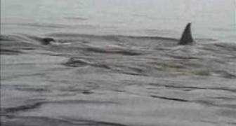 Un pinguino encuentra un refugio muy original