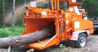 La impresionante maquina que pulveriza los arboles en pocos segundos