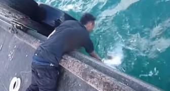 Se podra capturar un pez enorme sin caña de pescar?