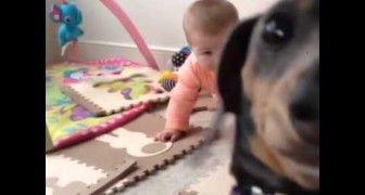 Jealous dog wants to be in the spotlight