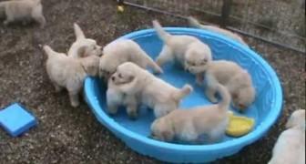 Sin agua no vemos la gracia segun parecen pensar estos perritos!