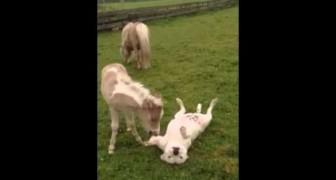 O cavalinho que faz carinho no seu amigo cão