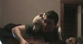 Dieser Hund ist ganz entzückt von den Songs seines Herrchens