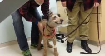 Un tendre chien retrouve sa famille après une opération qui lui a redonné la vue