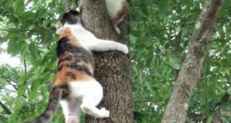 Mamãe gato tenta salvar seu filhote