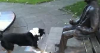 Der arme Hund versteht einfach nicht, warum der Mann das Stöckchen nicht werfen will