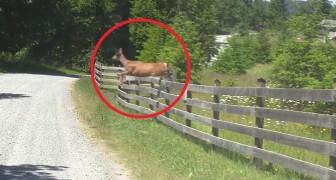 Salta a cerca para mostrar a estrada ao seu filhote