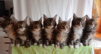 Das passiert, wenn sieben Katzen gleichzeitig reagieren