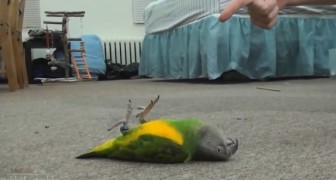You can't miss these cute animals playing dead
