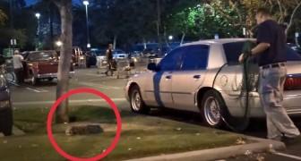 Ze vinden een verlaten hond op de parkeerplaats, wat ze doen om hem te redden is ontroerend
