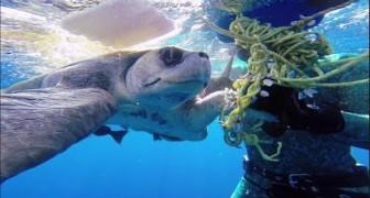 La tortuga liberada que regresa a saludar a su salvador