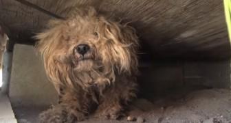 Este perro quedo un año en la calle a esperar a su patron que murio, pero alguno se fijo en él.