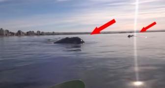 Das unglaubliche Erlebnis eines Pärchens im Kajak, das auf einem Wal reitet