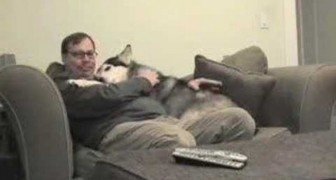 This is how this dog greets his owner when he returns from work every day!