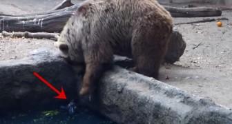 El extraño comportamiento del oso frente al cuervo.