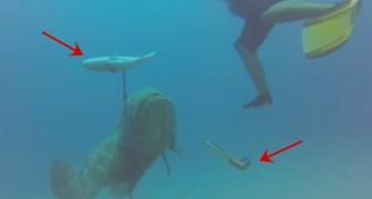 Die Revanche eines Fisches, der die Fischer angreift und sich deren Harpune schnappt