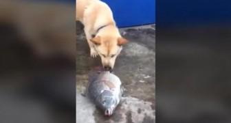 O cachorro que tentar salvar os peixes