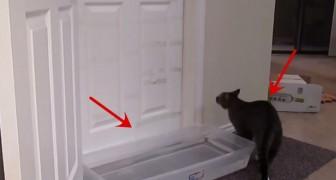 Porque colocaram uma bacia com água na frente da porta? Vai funcionar?