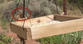 Um esquilo rouba as sementes para pássaros e depois...