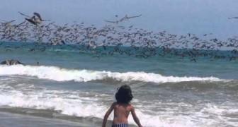 La espectacular tirada de pesca de centenares de pelicanes