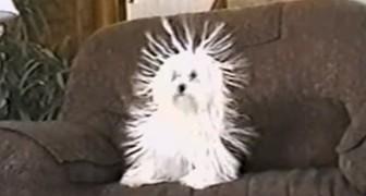 Het lijkt een normale hond, maar bij 0:20 is hij hilarisch!