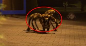 Mis niet de grap van de gemuteerde hond-spin, een van de meest kwaadaardige ooit gezien