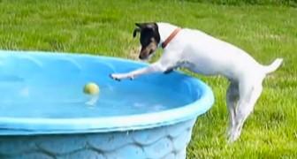Ein Hund versucht seinen Ball zurückzuholen, doch dann kommt es zu einem unvorhersehbaren Finale